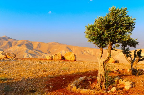Judea-mountain-Dead Sea