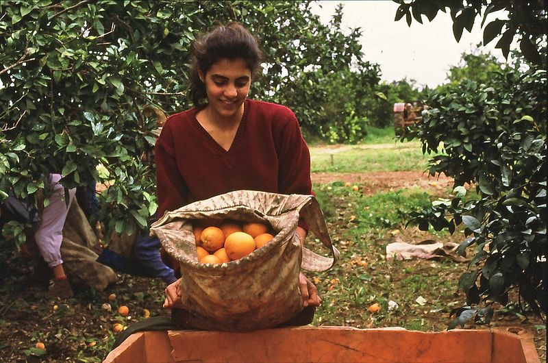 Woman-holding-bag-oranges-orchard-Gan Shmuel-Israel