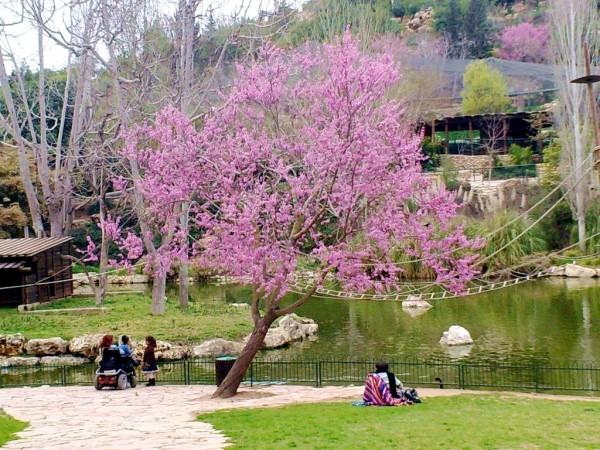 Tree-Blossom-Zoo