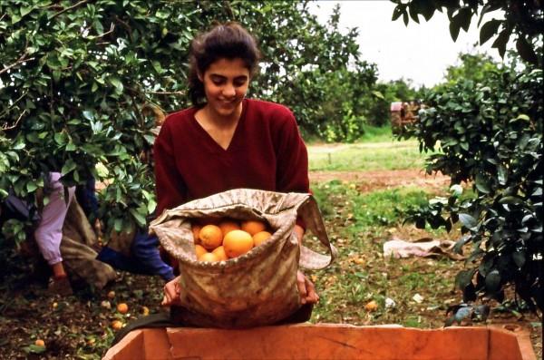 Gan-Shmuel_orchard