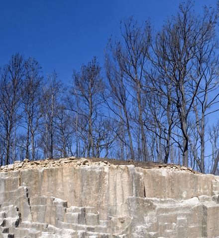 burned-trees-Carmel