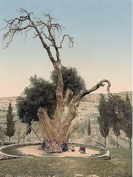 oak-Hebron-anti Messiah