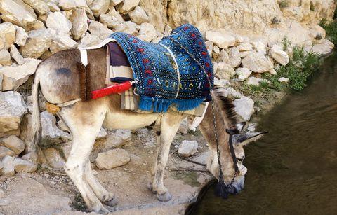 Donkey-river-Israel