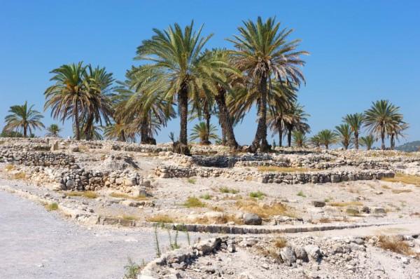 Megiddo-sacred trees