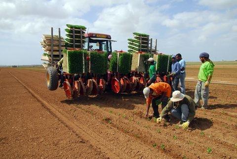 farmer-Negev Desert