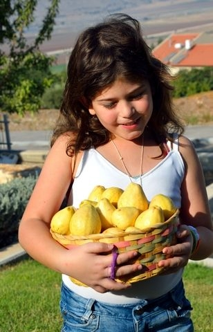 guava-basket-Israel-girl