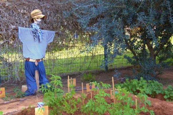 Israel-kindergarten-scarecrow-garden