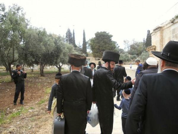 Jews-Temple Mount-visit-Orthodox