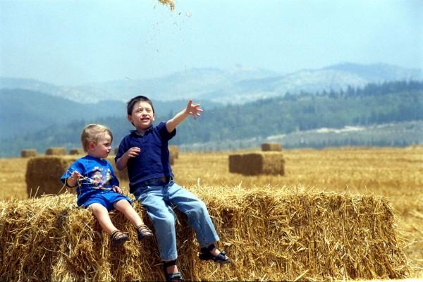 Israel-Harvest-Hay