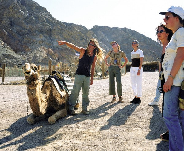 Israel Eilat Camel ranch tourists
