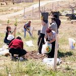 Planting trees at Ma'aleh Rehavim