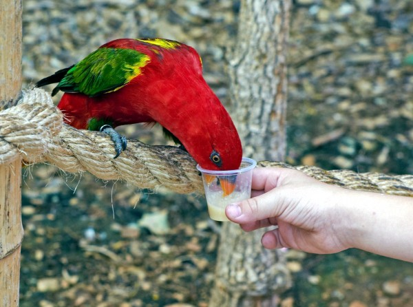 A parrot is fed at the zoo in Jerusalem.