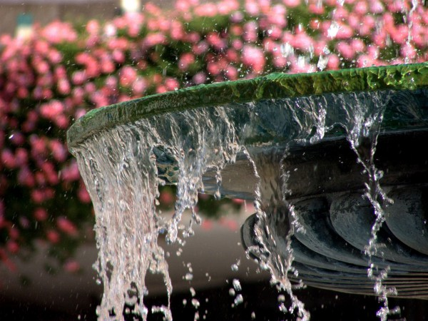 Water and flowers in Jerusalem