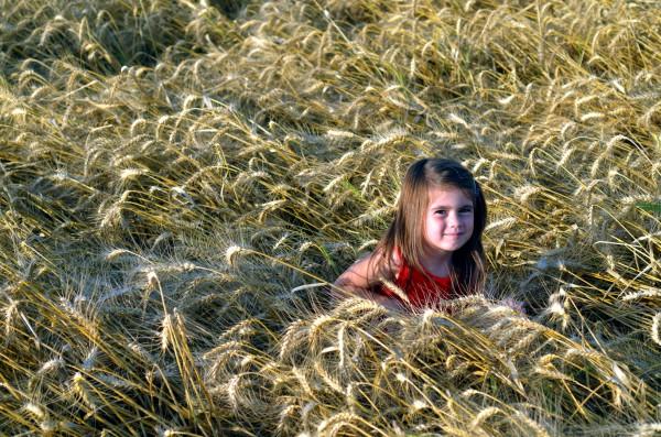 An Israeli girl in a field of grain.