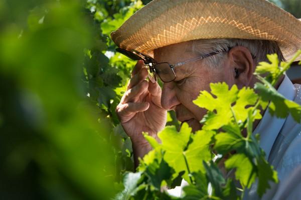 Israel-viniculture-wine-vineyard-Samaria