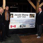 Jacob Sheep_Canada_Israel