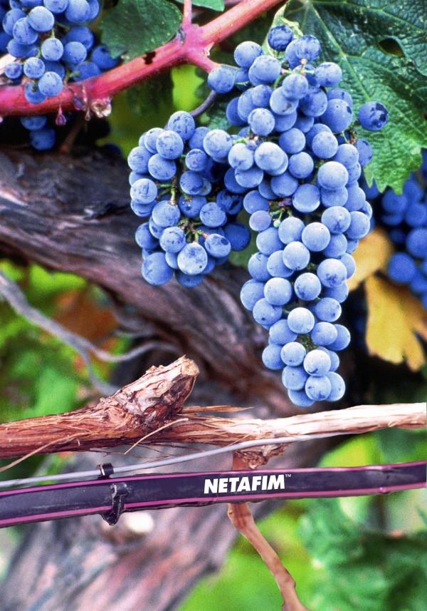 Netafim, UniWine, drip irrigation