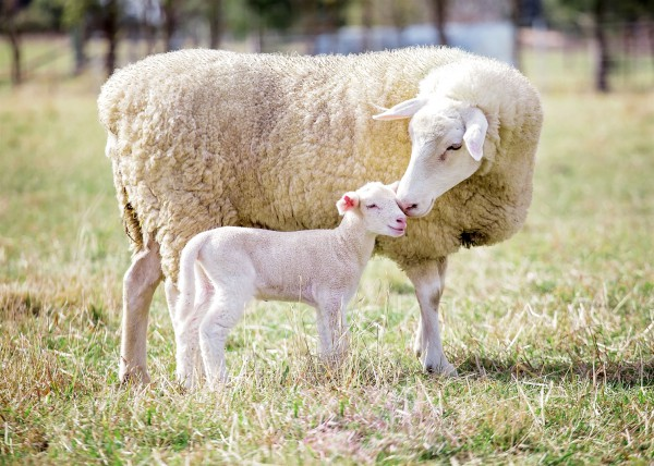 """God will provide for Himself the lamb for the burnt offering, my son.""  (Genesis 22:8)"