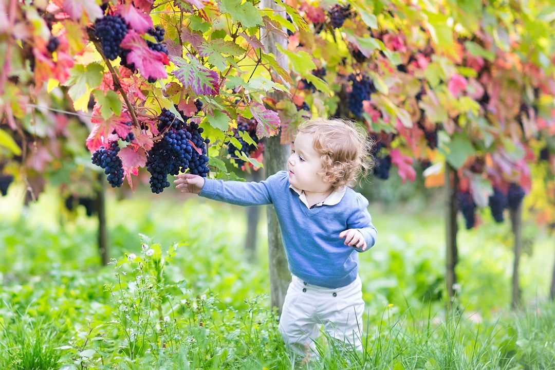 1080_picking grapes