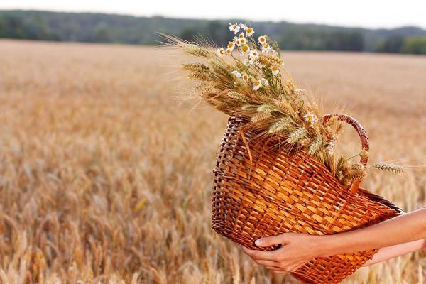 basket_wheat, harvest, Temple sacrifice