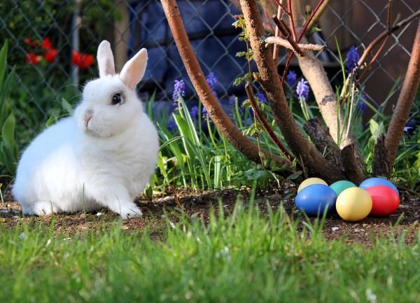 Easter bunny, pagan symbol, fertility