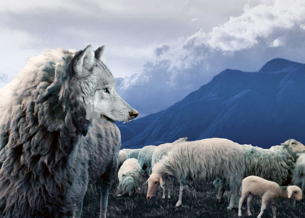 wolf dweling with the lamb