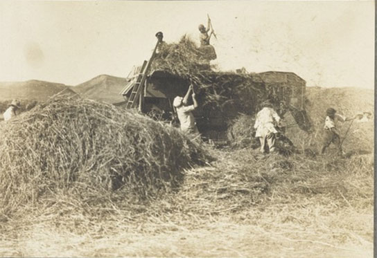 Men threshing wheat in the Jezreel Valley at Kibbutz Merhavia (meaning a large place, as in Psalm 118:5). It was established in 1929 by members of Hashomer Hatzair (The Young Guard), a HeChalutz youth movement that began in 1913.