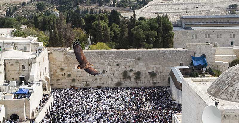 """""""Under His Wings"""", white-tailed eagle flying over western wall plaza crowds"""